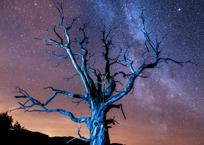 Loan tree and a trillion stars